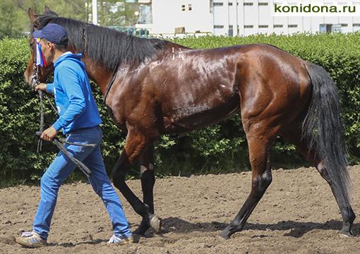 Скаковые лошади на продажу частные объявления дзержинск 8313 доска объявлений недвижимость